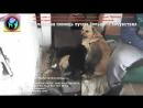 Собака с щенками охраняет заброшенный дом в котором ее предал хозяин До слез hel