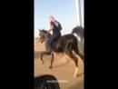 Очень красивый танец арабской лошади_144p.3gp