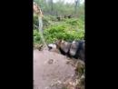 Баламут Ютка ругается на струю воды;)