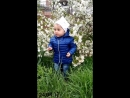 Диора возле вишни 27