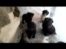 Домашний приют для собак У Ларисы