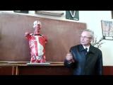 Видео-урок по анатомии . Мышцы спины и живота.