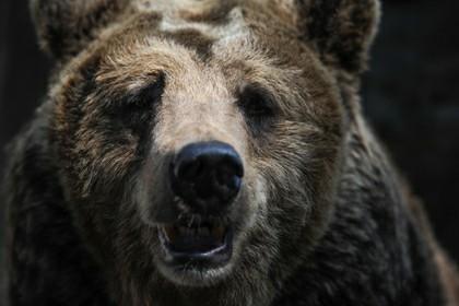 Медведь взял в заложницы россиянку