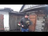 [Руслан Гительман] Я и Батя танцуем танец с котом Моркизом