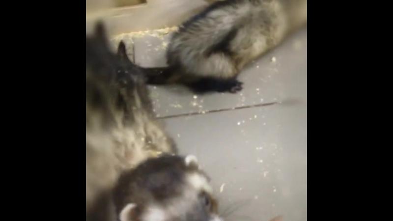 Приходите трогать, гладить и кормить забавных зверят в зоопарк в ТЦ НОРА