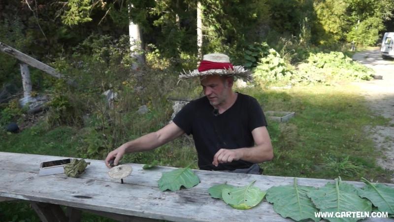 Выращивание табака самостоятельно.Немецкий садовод (Tabak selbst anbauen, mit Tipps für die Fermentierung und Verarbeitung)