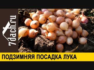 👩🌾 Правила подзимней посадки лука - 7 дач