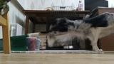 DOG FITNES with border collie Cassie