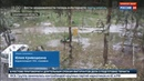 Новости на Россия 24 • Тайфун Талим валит деревья и заливает улицы на Сахалине