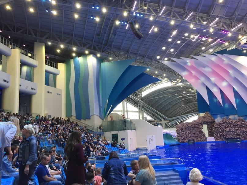 Северная Корея Владивосток. Дельфинарий
