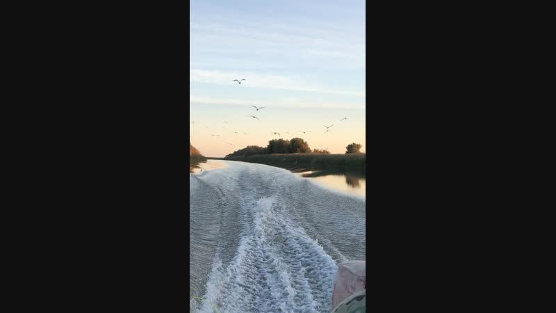 Чайки летят за лодкой Астрахань
