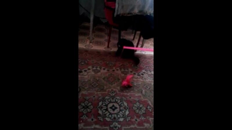 Мася учится играть