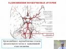 Лекция 1 кровоснабжение головного мозга