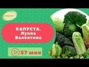 Секреты выращивания капусты в Сибири Луппа Валентина