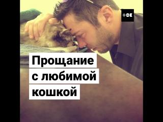 Прощание с любимой кошкой