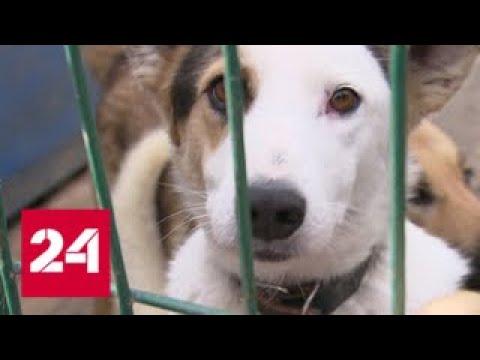 В подмосковном Королеве сотни собак и кошек могут оказаться на улице - Россия 24
