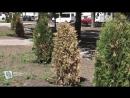 Проблемы комфортной городской среде в Курске