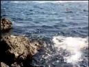 Дубравка (1967) фильм