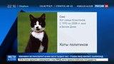 Новости на «Россия 24»  •  Хвостатые и знаменитые: семь известных котов политиков