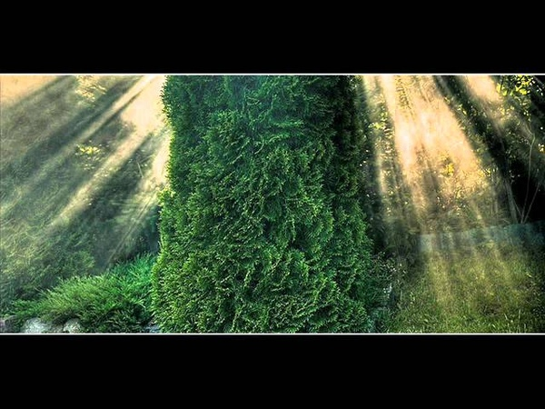 Sokolov - Rachmaninov Prelude op.23 n.9 (1981).wmv
