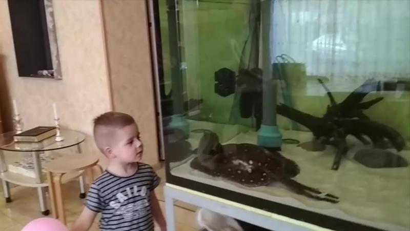 Новый аквариум 1200 литров, новые впечатления, новые рыбки.mp4