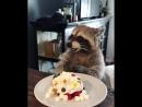 Енот Ракета отмечает свой День рождения