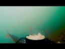 Реакция рыбы на ПШЁННУЮ КАШУ и МОТЫЛЯ Подводная съемка