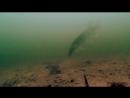 Триллер ЩУКА И ЖИВЕЦ Рыбалка и Подводная съемка