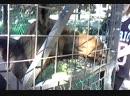 короткое видео с зоосада