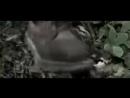 Cancer Bats - Pneumonia Hawk