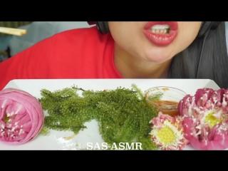 [sas-asmr] asmr raw sea grapes (extreme crunch eating sounds) no talking | sas-asmr