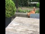 Кот заступился за собаку