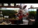 Заяц жгёт