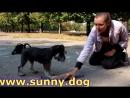 Приучить щенка ходить к туалет на улицу Как приучить писять и какать на улице. главные правила!