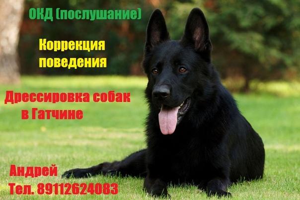 https://vk.com/dres_dogs - наша группа