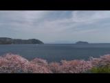 Aquatone - Sakura