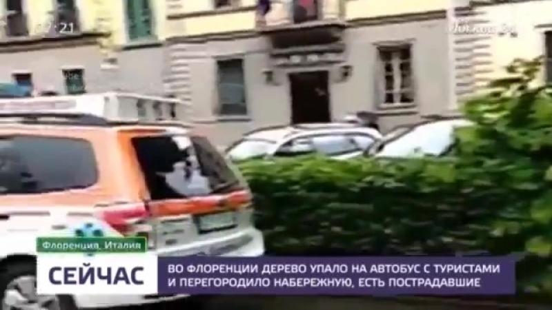 Дерево упало на автобус с туристами во Флоренции - Москва 24