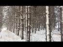 Лес зимой. Холмы России. Кубок России по ралли рейдам