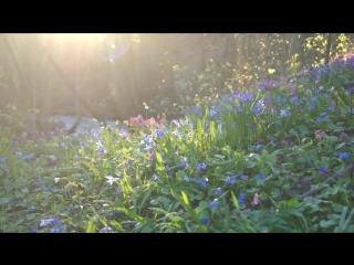 Relaxing Celtic Music_ Soothing Sleep Music, Peaceful Music, Calming Harp Music