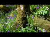 Forest Sounds-Birds Singing-Sound of Nature-Birdsong-Relaxation-Relaxing Meditation-Mindfulness