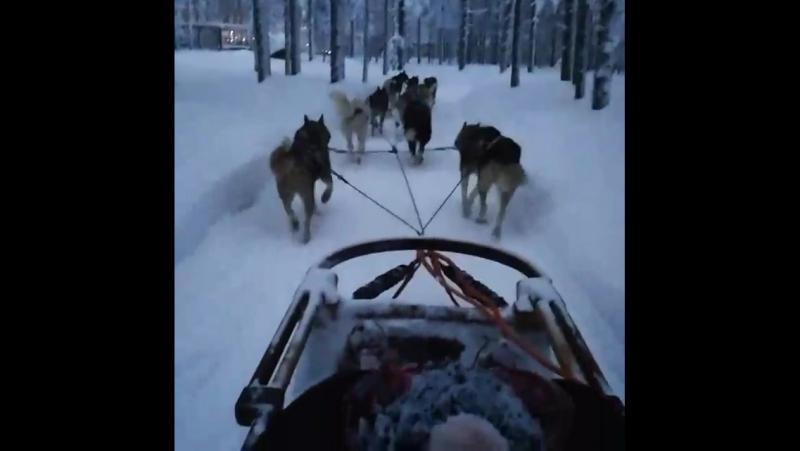 Катание на санях в Лапландии