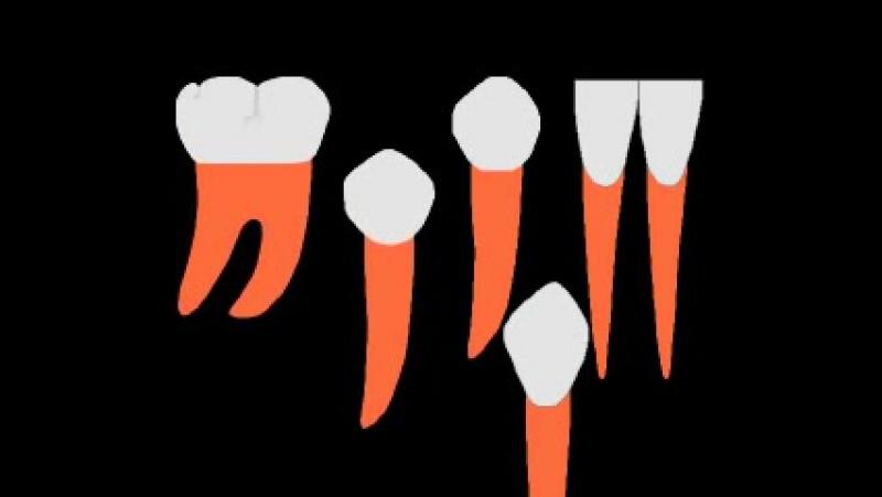 Сменный прикус, удаление. Пропедевтика ортодонтии