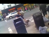 Pit Bull attacks little dog on streets of NYC