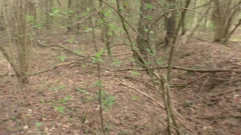 Сморгонь Лес 2 Вторая траншея с восточной стороны леса Часть 1