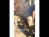 Змея в Жатайском затоне