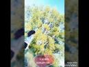 XiaoYing_Video_1529229187782.mp4