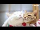 Кошачьи нежности