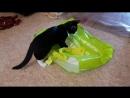 Сумчатые котята в добрые руки