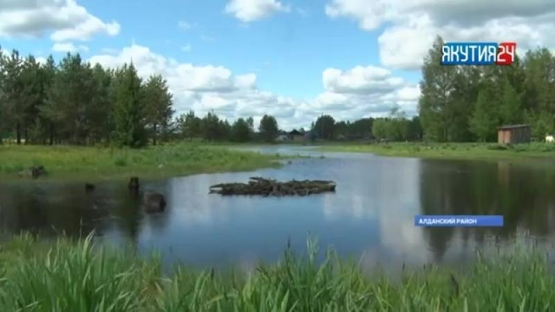 Медведи выходят к населенным пунктам Алданского района в поисках пищи