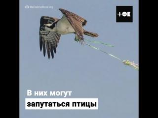 Как воздушные шары убивают животных
